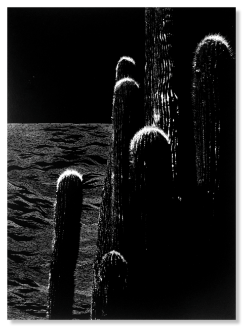 A la sombra del cactus